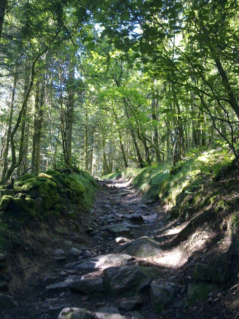 Vezelay - le Puy : Forêt du Morvan